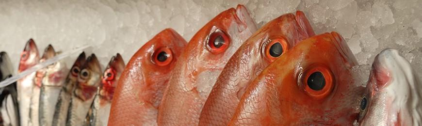 Meta title-Fisch